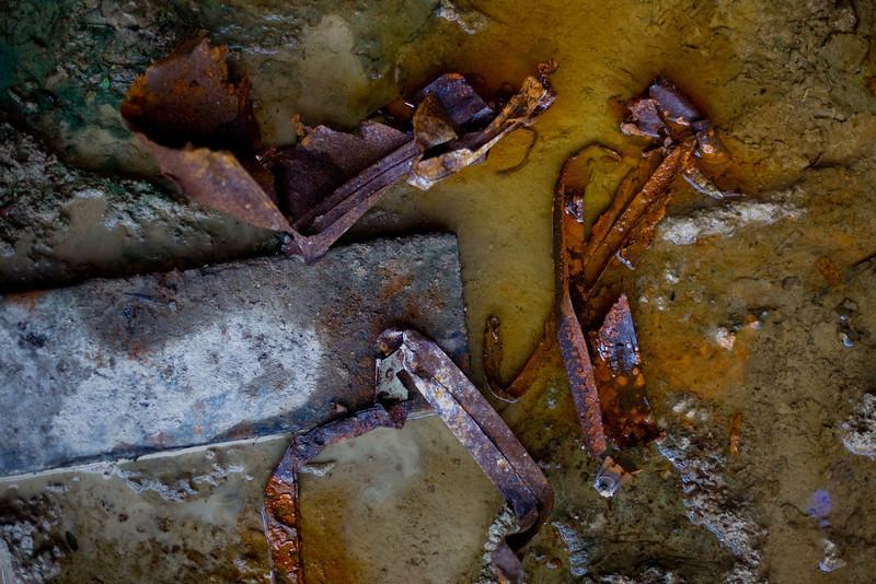Glebe Tram Sheds: Urban Fossils