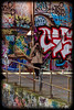 Glebe Tram Sheds: Graffiti Photographer