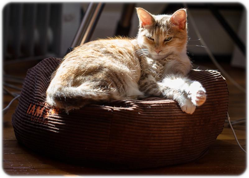 My Spot in the Sun