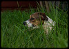 Shelly's Pets: Chelsea, Jungle Dog