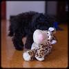 Shelly's Pets: Jet