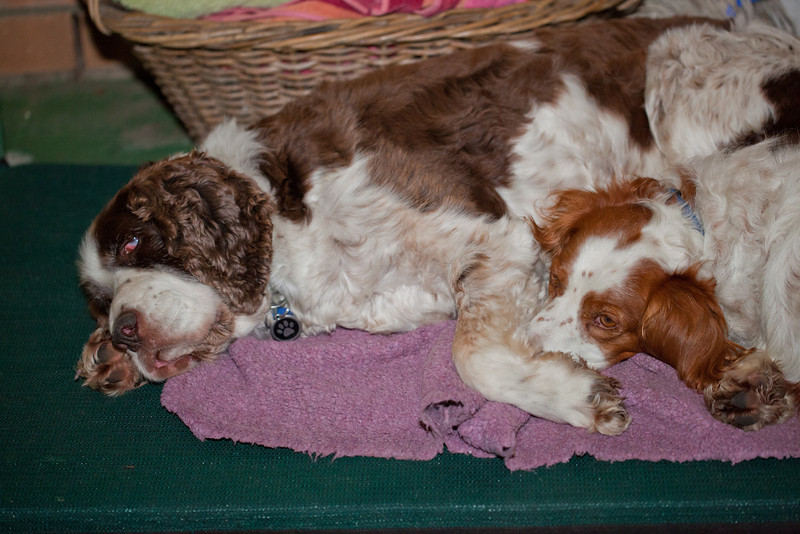Dogs a Snoozin'