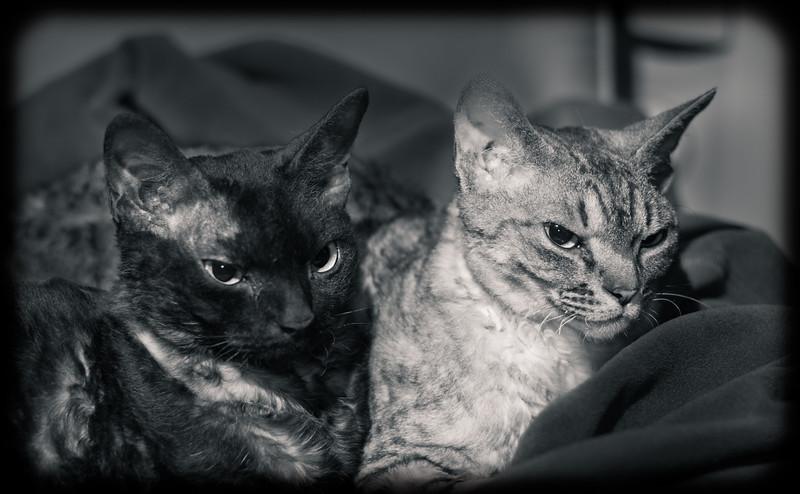 Cranky Catz
