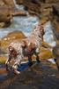 Iza's Dog Huey on the Rocks at Manly