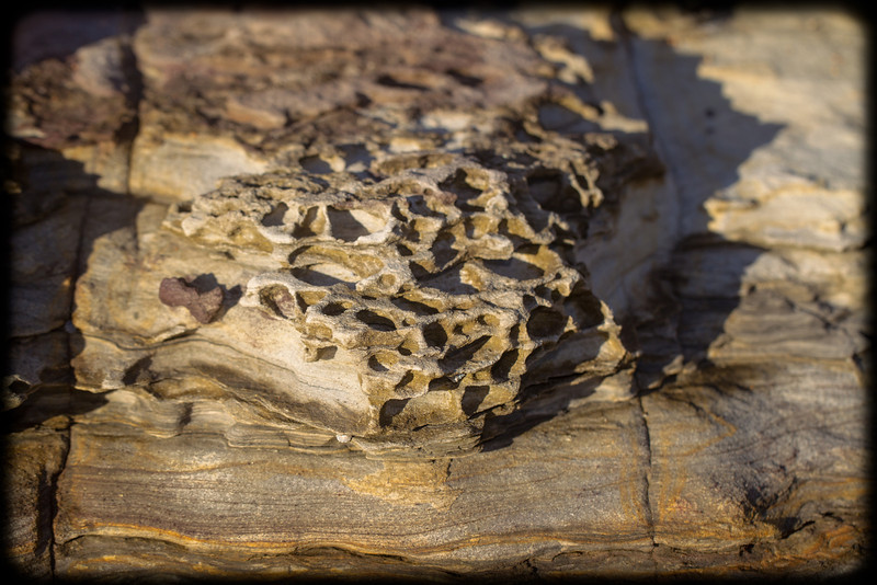 Honeycomb weathering on Narrabeen Headland