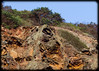 Honeycomb weathering on Narrabeen Headland
