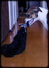 Shelly's Pets: Chelsea and Jet