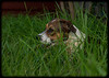 Shelly's Pets: Chelsea, Jungle Dog