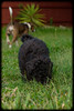 Shelly's Pets: Chelsea