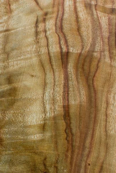 WW58: Wood Texture: Camphor Laurel