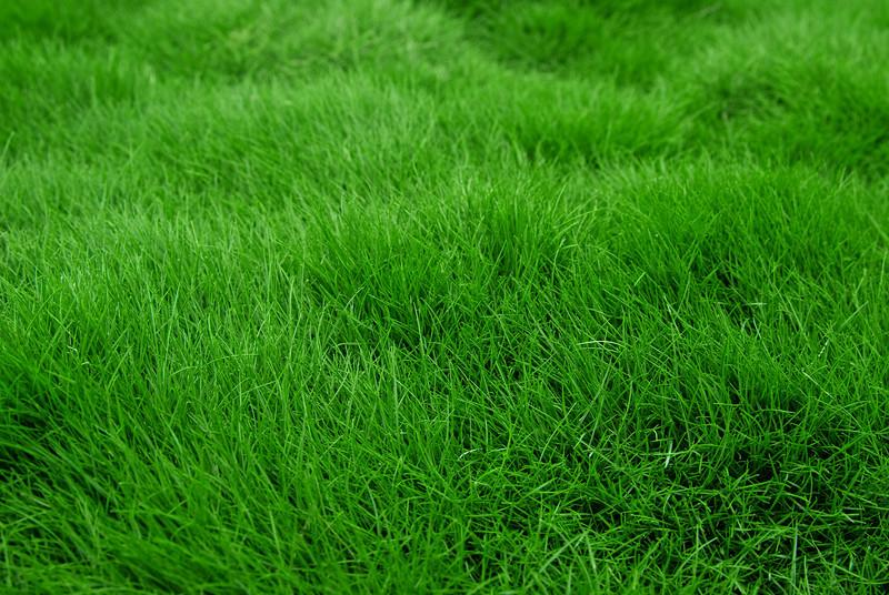 Very fine bladed ornamental grass