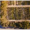 Miti Trees - Tree Nursery