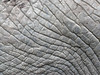 African Elephant Skin Texture