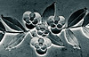 Steel Flowers