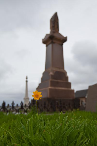 Daisy the Cemetery