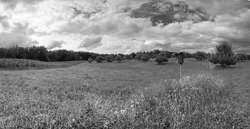 Beckwith's Orchard, 7-5-2013.