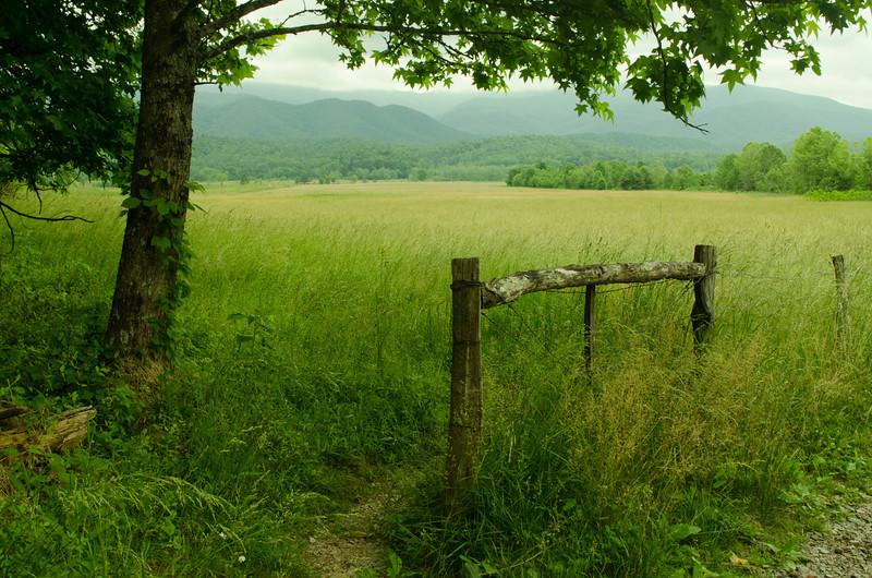 20140603_CadesCoveTN_meadow_dbp