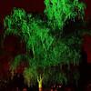Emb_Tree