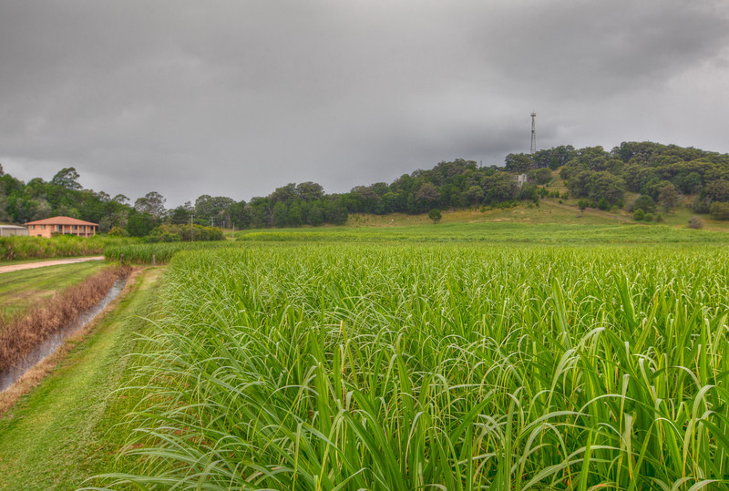 Sugarcane Farm on an Overcast Day