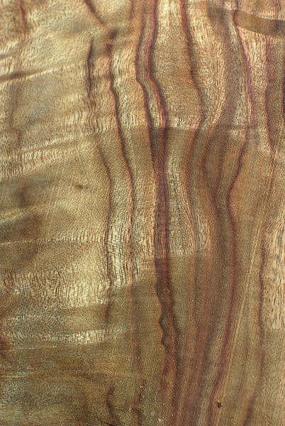 Wood Texture: Camphor Laurel?