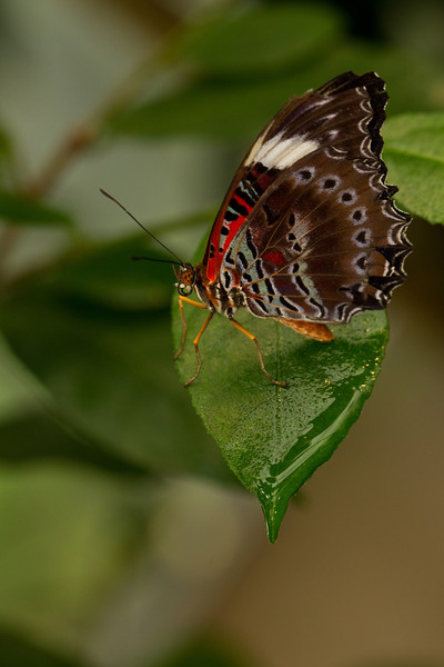 Coffs Harbour Butterfly House