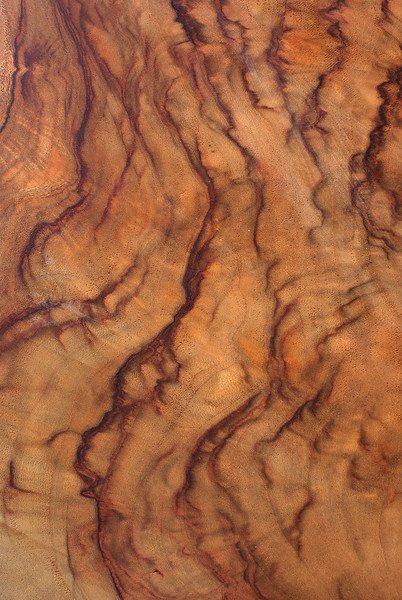 Wood Texture: Camphor Laurel