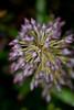 Pink Bromeliad Flower