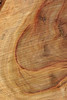 Wood Texture: Camphor Laurel