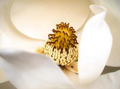 20150515-magnolia-adj-0125
