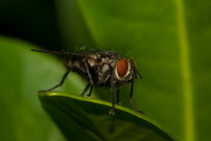 Shot using extension tubes and a sigma 105mm macro lens