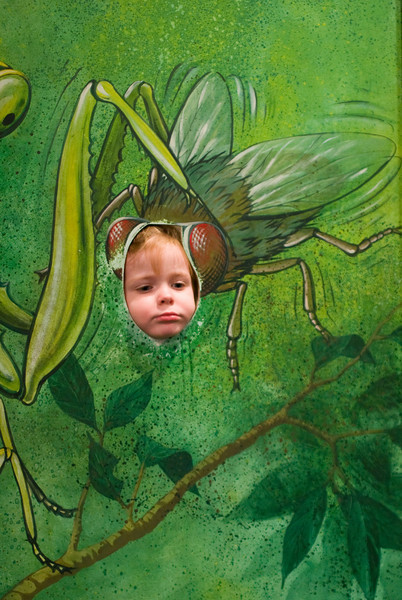 Eleanor the Fly