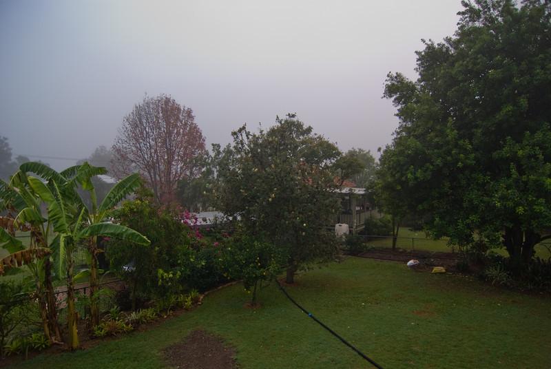 Foggy Yard
