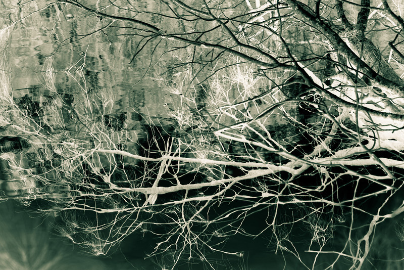 Branches Over the Water
