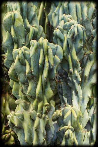 """""""Shar Pei"""" Cactus"""