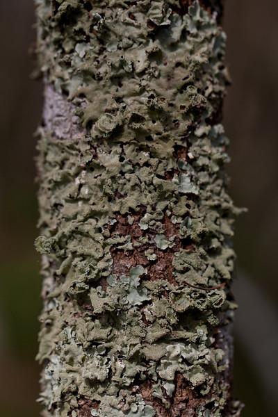 Lichen Covered Tree Trunk