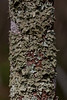 Lichen Covered Tree Trunk