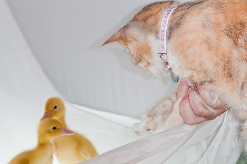 """""""Possum, Meet Ducklings"""""""
