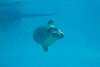 Seals at Underwater World
