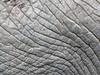 African Elephant Skin Texture