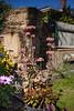 Sunny Winter Garden