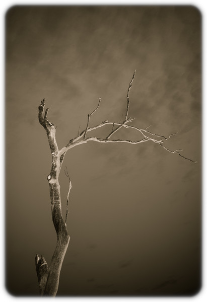 Dead Wood and Sky