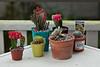 Eleanor's Cacti
