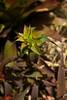 Spiky Bromeliad