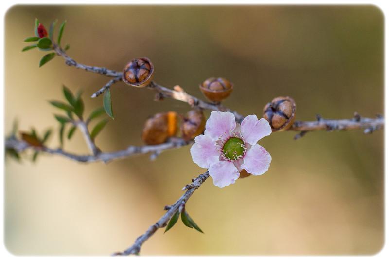 Small Unknown Wildflower (1.5 cm diameter)