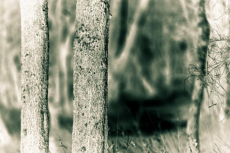 Wallamba Woods