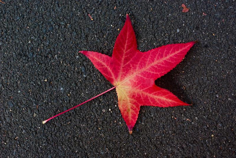 Red Leaf on Asphalt