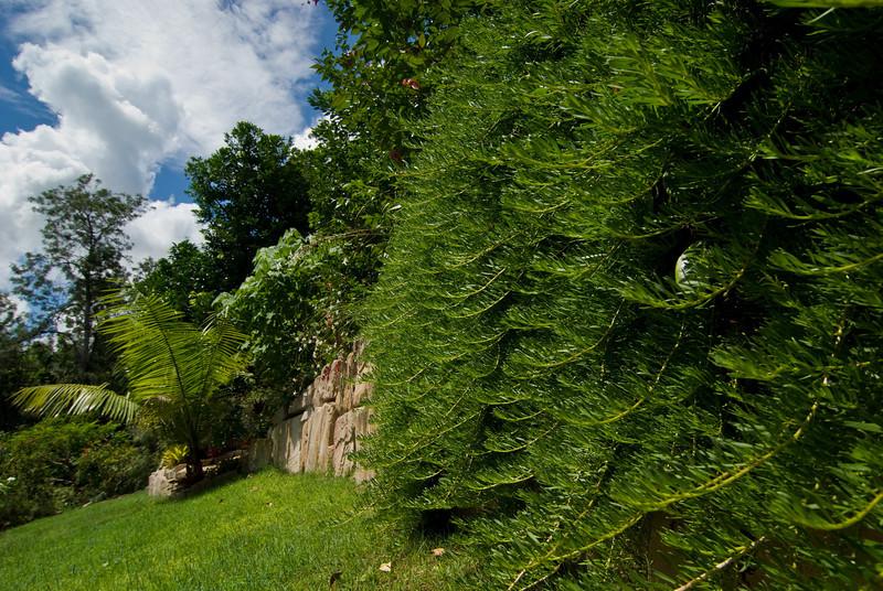 CRCT's garden in Bardon