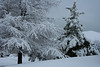 Snowfall_2010_02_14 :