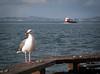 Bird, Boat & Beak<br /> USA Places<br /> Entered 2015