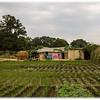 Farmland and House